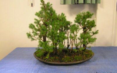 Atelier Forêts – Novembre 2008