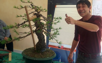 Réalisation d'un bonsaï avec maître Koji Hiramastu